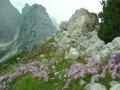blumen-julische-alpen